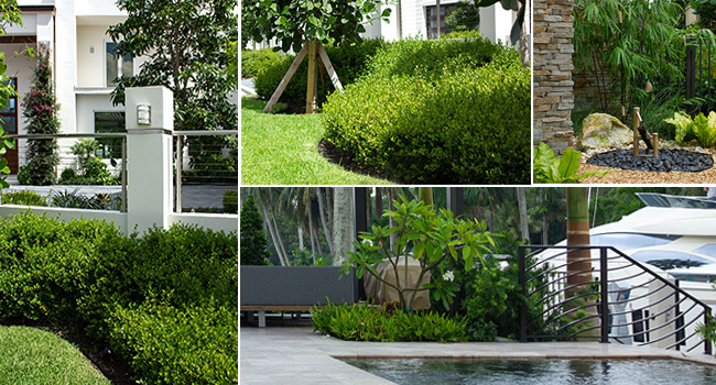 Florida Landscape Architects